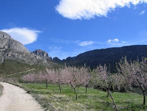 Photo: walk in Sella almond blossom