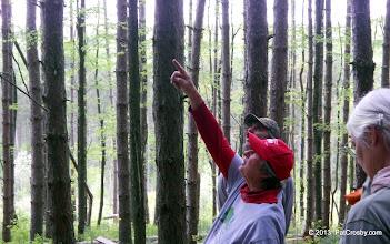 Photo: Dangerous trees (widow makers)