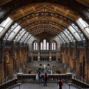 Natural History Musuem Grand Hall by Almas Bavcic - Buildings & Architecture Other Interior
