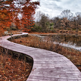 Boardwalk at the Wetlands  by Margie Troyer - City,  Street & Park  Vistas