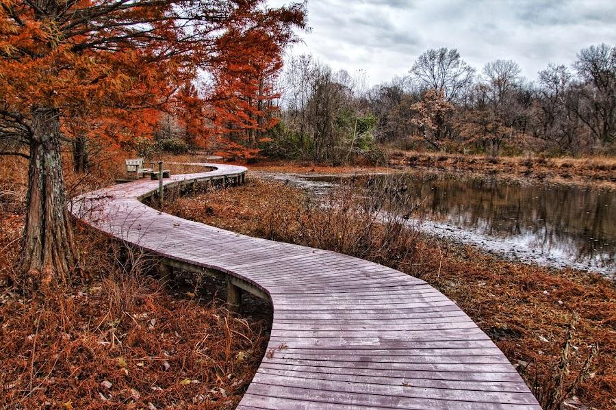 Boardwalk at the Wetlands  by Margie Troyer - City,  Street & Park  Vistas
