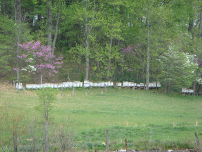 Photo: Somebody's apiary between Stuart and Woolwine. That's a long line of hives!