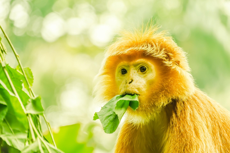 Singapore Zoo monkey2