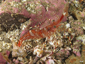Photo: Shrimp