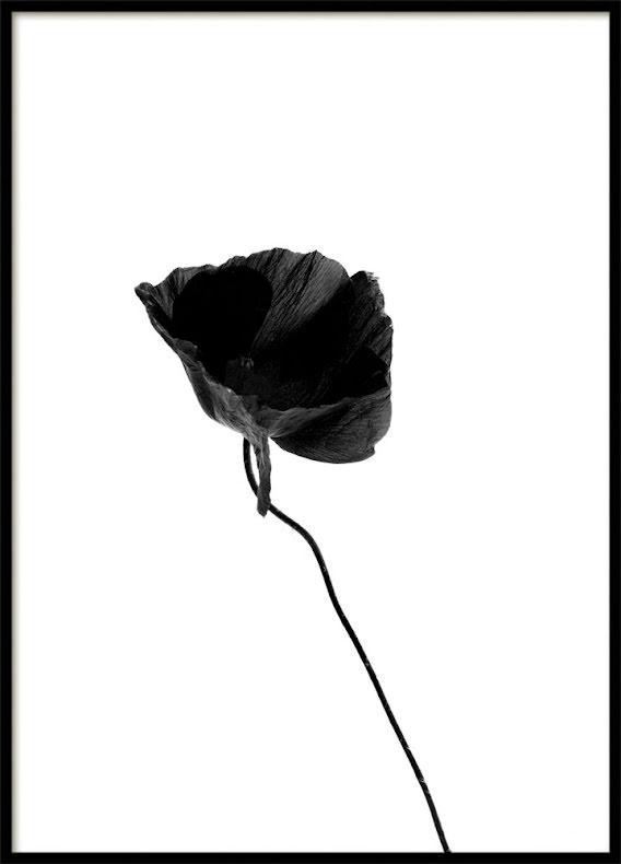 BLACK FLOWER, POSTER