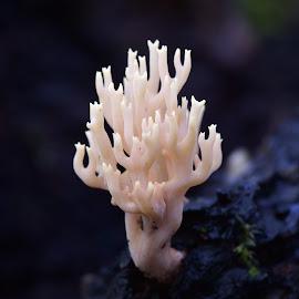Raising Fingers by Marco Bertamé - Nature Up Close Mushrooms & Fungi ( mushroom, fingers, white, shroom )