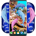 Dolphins HD Live Wallpaper 🐬 Dolphin Wallpapers icon