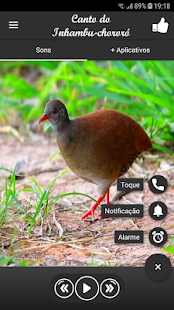 Download Canto do Inhambu-chororó For PC Windows and Mac apk screenshot 2