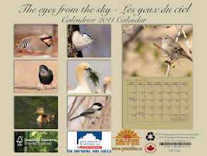Photo: Back Calendrier 2011  Mes Photos d'oiseaux