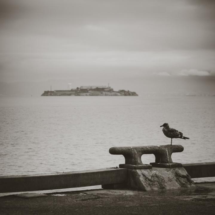Fuga da Alcatraz di Laura Benvenuti