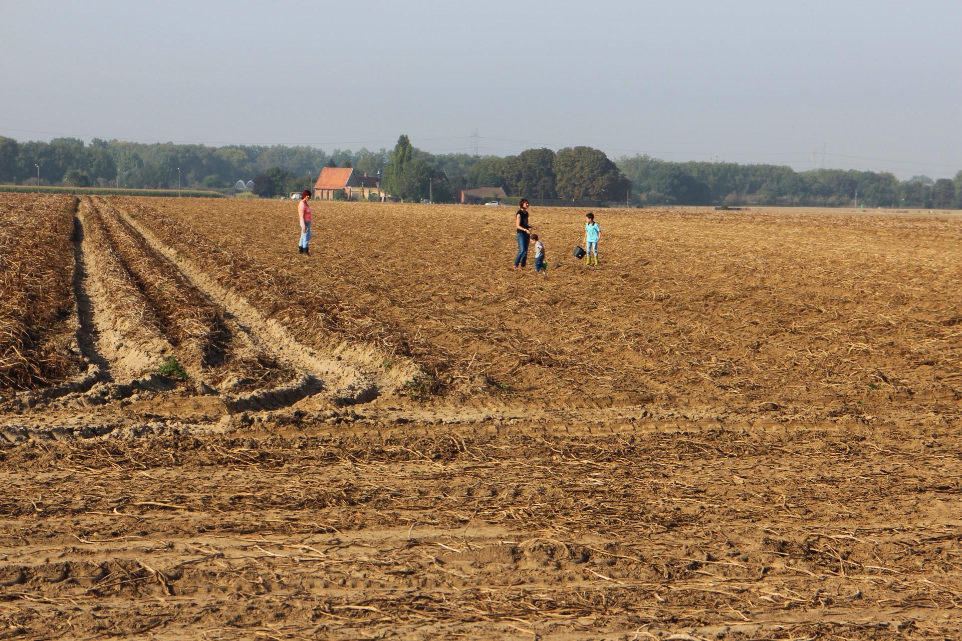 Photo: gans de famille zoekt petatjes , in Vlaanderen is dat voorbij