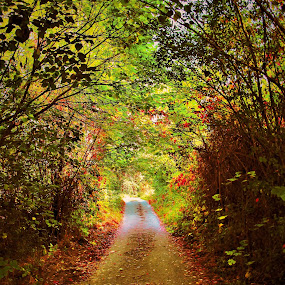 by Alin Achim R - Landscapes Forests