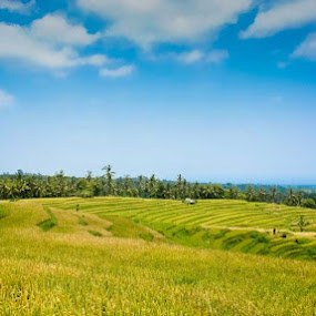Buleleng by Agus Pranayoga - Landscapes Mountains & Hills ( terrace, bali, buleleng, reice field )