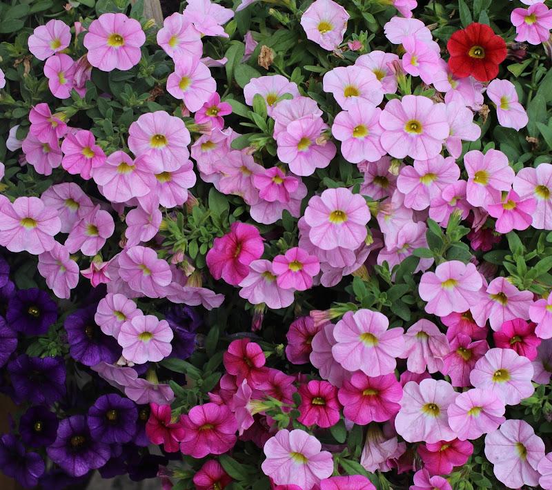 """""""I diversi colori dei fiori"""" di Flavy"""