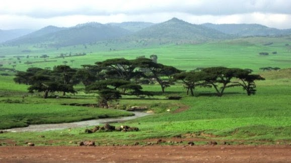 Treks Mountains in Africa // Ethiopia Bale Mountains Journalist On The Run