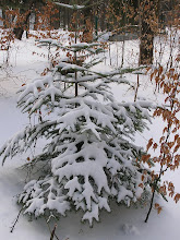 Photo: C4010008 Krynica - juz kwiecien a tu snieg