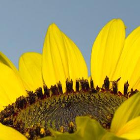 by Patti Cooper - Flowers Single Flower (  )