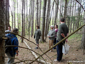 Photo: Discussion of red pine plantations and economic value