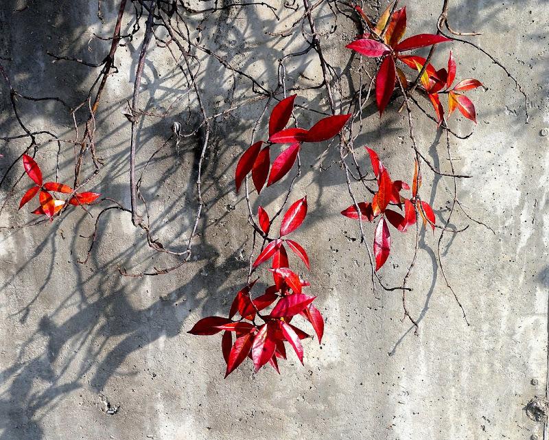 ombre e colori di Wilmanna