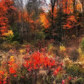Autumn leaves by Morris Fremar - Instagram & Mobile iPhone