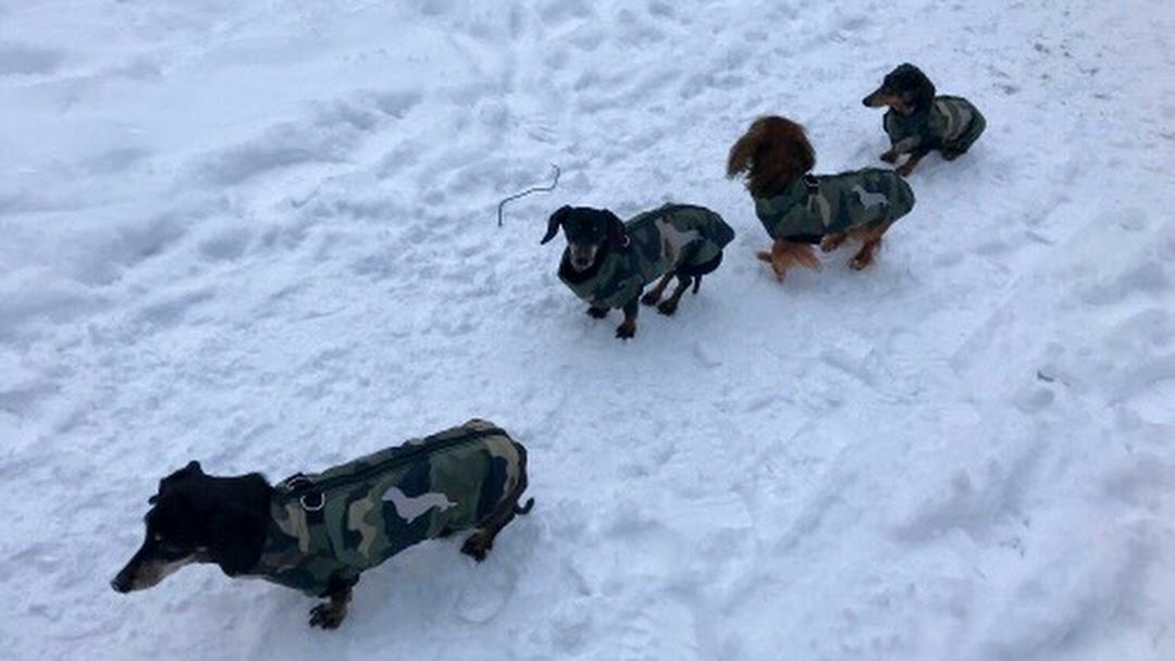72252241bf JK-Dogstyle Egyedi kutyaruhák a Te igényeidre szabva! - Kézműves ...