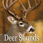 Deer Sounds