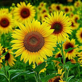 by Karen McKenzie McAdoo - Flowers Flowers in the Wild