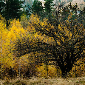 Against by Iulia Georgescu - Nature Up Close Trees & Bushes ( mountains, village, wood, tree, grass, autumn, fall, forest, yellow )