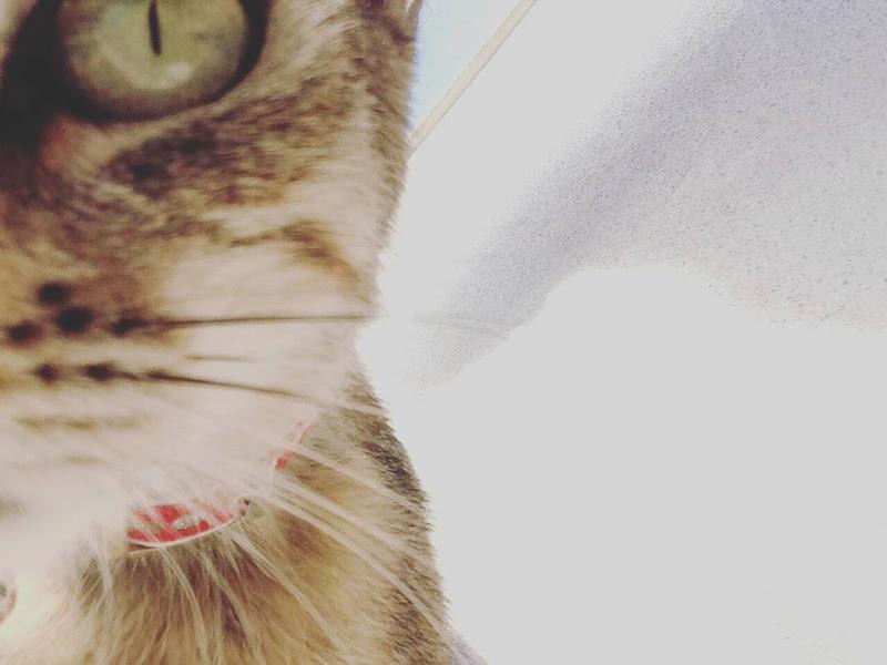 occhio di gatto_ di elii_mrn