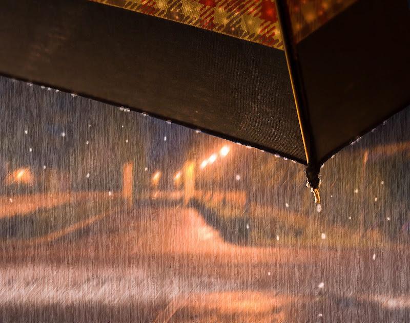 Al coperto sotto l'ombrello di bob