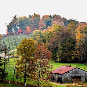 Kentucky Autumn  by William Stewart - Landscapes Mountains & Hills ( nature, autumn, trees, barns, rural, kentucky )