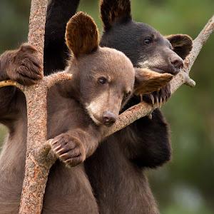 Hangin Together.jpg