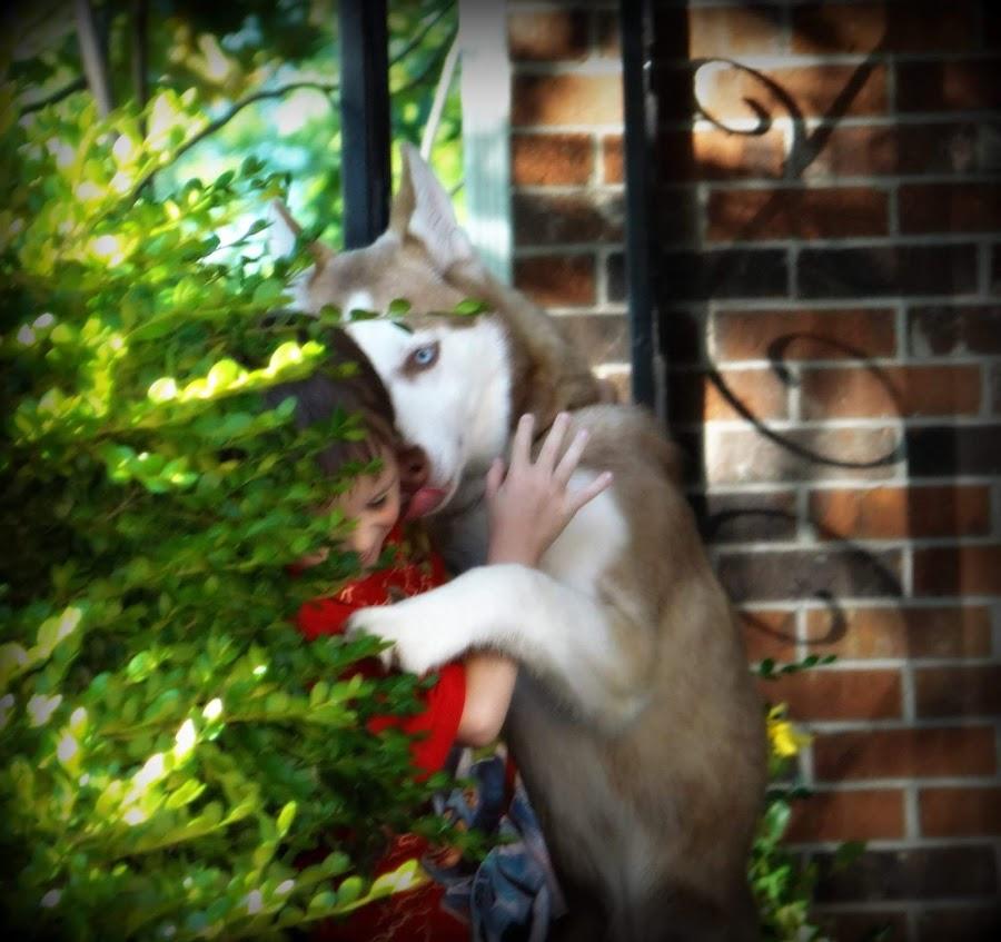 Gabriel  by Jessica Sasseen - Animals - Dogs Playing ( love, playing, fun, dog, boy, human )