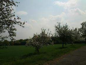 Photo: Spring in Bloom at Technologiepark, Dortmund