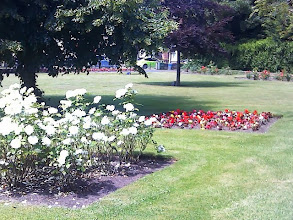 Photo: A photo from the rear of the South St park, with all the flower beds in bloom.