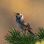 by Rita Birkeland - Animals Birds ( animals, natur, wildlife, ville fugler, birds, dyr, norway, wild birds )