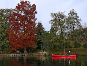 Photo: Rosso: Canoa e Cipresso delle Paludi
