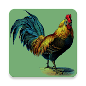 Rooster Alarm and Ringtone