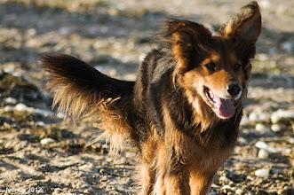 Photo: freundliche und flinke Hunde sind die Lieblinge des Menschen