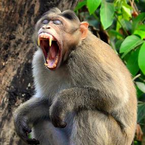Expression at it's peak by Manoj Kulkarni - Animals Other Mammals