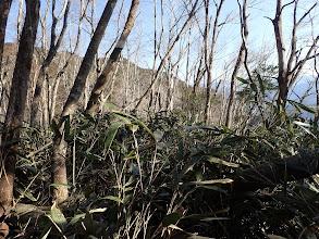 笹薮を進むが倒木で迂回