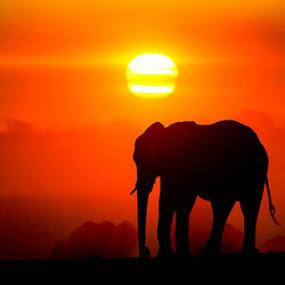 Water of Life... by Dana Allen - Animals Other Mammals ( zimbabwe, sunset, elephant, dana allen, hwange national park )