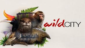 Wild City thumbnail
