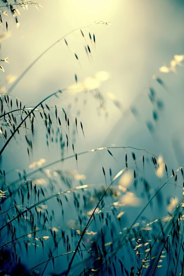 Spring dreaming by Colleen Milburn - Nature Up Close Leaves & Grasses ( dreaming, canon, full frame, buy, grass, green, beautiful, white, fine art, ceeveem, yellow, landscape, spring, colleen milburn, sale, grasses, nature, blue, sell, photoshop, long grass )