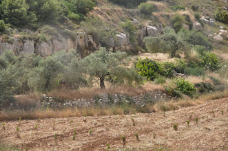 Photo: Young trees in the valley planted after all trees there were destroyed in 2014 by the Israeli army