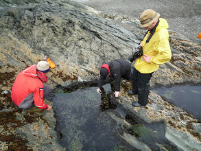 Photo: Luke throws some mussels into the pool, and Niamh takes a video of the ensuing fish-fight.