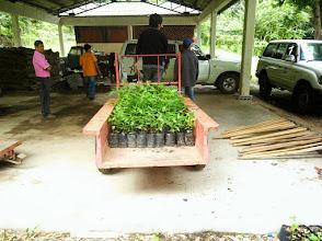 Photo: 2014/08 第1回植樹 (苗) Planting(Nursery)