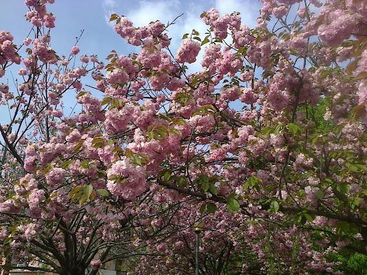 Fioritura di primavera di archiviobesozzi