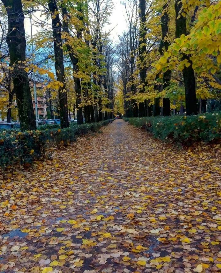 La strada verso l'inverno di _ale_calabrese_
