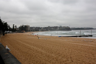 Photo: Year 2 Day 229 - Beach at Manly
